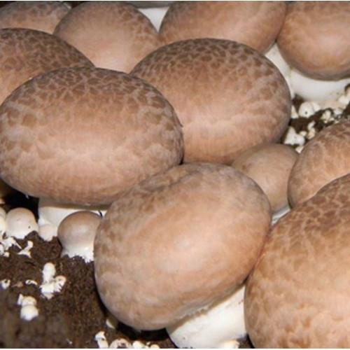 Saco Cogumelos Portobello