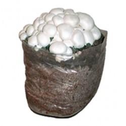 Cogumelos Prontos